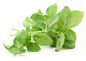 Basil leaves — Foto de Stock