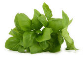 Pile of fresh green basil — Stock Photo