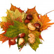 Maple leaves and chestnuts — Stock Photo