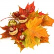 Stock Photo: Maple leaves and chestnuts