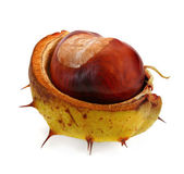 Chestnut on white — Stock Photo
