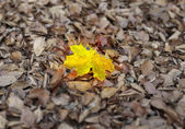 Autumn individuality — Stock Photo