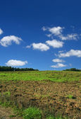Ploughed pasture — Stock Photo