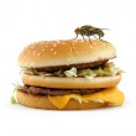 Home fly sitting on appetizing hamburger — Stock Photo