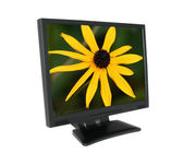LCD screen with gorgeous flower — Stock Photo