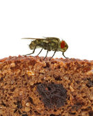Home fly sitting on slice of bread — Stock Photo