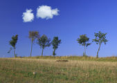 Tree line with two cumulus clouds — Stok fotoğraf