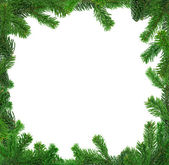 Xxl image of square spruce twig frame — Stock Photo