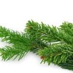 Spruce twig on white — Stock Photo