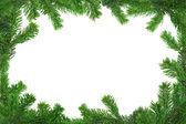 Xxl bild av spruce twig ram — Stockfoto
