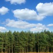 Tree line with cumulus clouds - Stock Photo