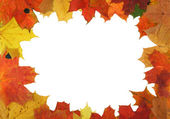 Autumn maple frame — Stock Photo