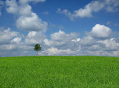 Lone tree with cumulus clouds — Stock Photo