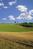 Idyllic summer scenery — Stock Photo