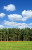 Tree line with cumulus clouds — Stockfoto