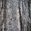 Bark — Stock Photo #2161634