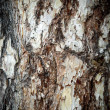 Bark — Stock Photo #2161672