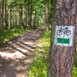 Cycle lane leading through the forest — Stock Photo