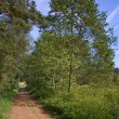 Stock Photo: Forest path in summer