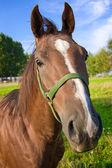Funny horse head — Stock Photo