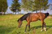 Brown horse in the farm — Stock Photo