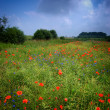 Meadow full of flowers - Stock Photo