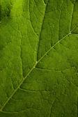 Natural leaf — Stock Photo