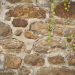 Stock Photo: Old wall with green vine