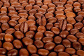 Three coffee beans — Stock Photo