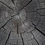 Wood texture2 — Stock Photo