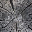 Stock Photo: Wood texture1