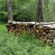 Stock Photo: Sawed timber piled up