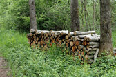 Sawed timber piled up — Stock Photo