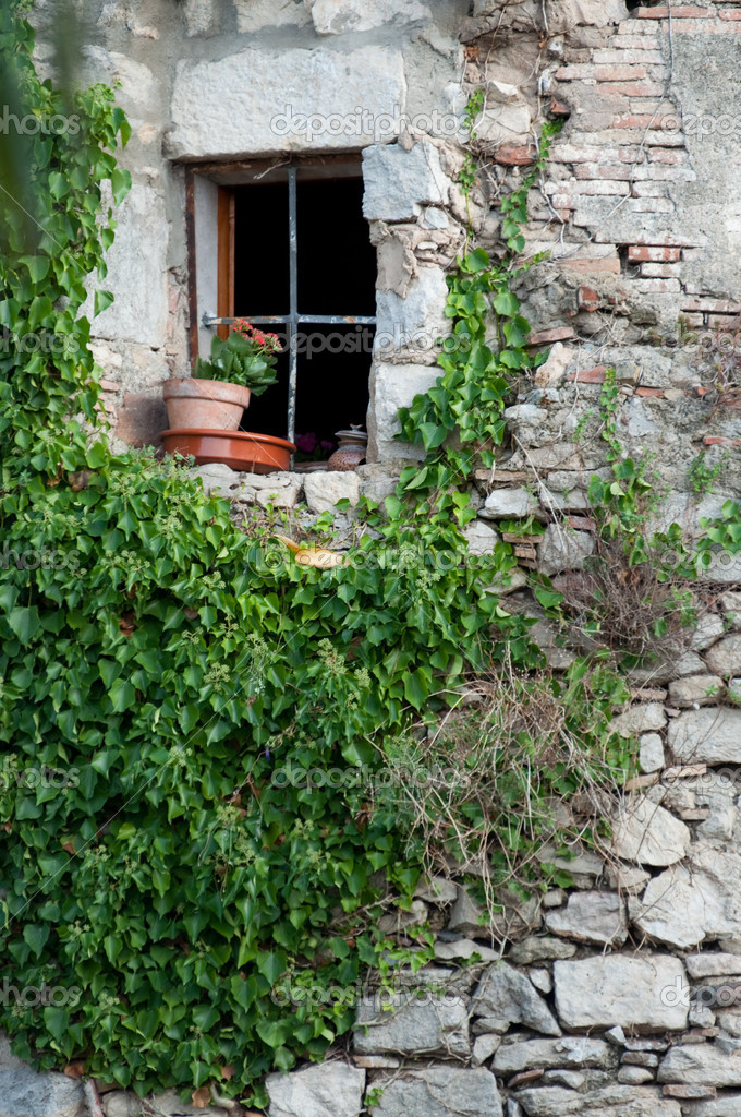 Window twined an ivy with a flowerpot — Stock Photo #2126078
