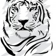 Stock Vector: White tiger