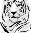 tigre blanco — Vector de stock