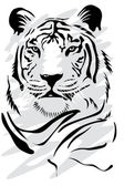 White tiger — Stock Vector