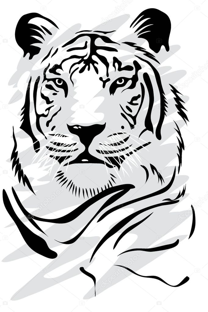 Illustration of a gorgeus white tiger — Stock Vector #2275069
