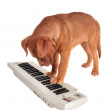 Puppy Playing electrical Piano — Stock Photo