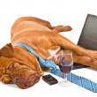 Hardworker Fell Asleep — Stock Photo