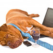 Hardworker Fell Asleep - Stock Photo
