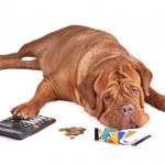 Dog in Debt — Stock Photo