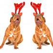 ������, ������: Two Singing Christmas Reindeer Dogs