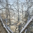 Abstract Winter Trees — Stock Photo