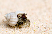 Hermit crab on a sandy beach — Stock Photo