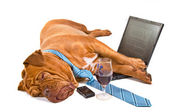 Hardworker Fell Asleep — Stock Photo