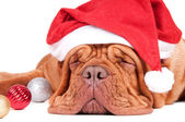 When is Santa coming? — Stock Photo