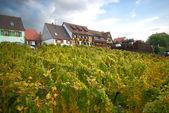 Hillside vineyard — Stock Photo