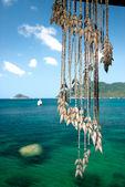 Hanging seashells — Stock Photo