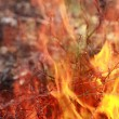 Wildfire — Stock Photo